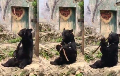 [新聞]  廣島黑熊操弄木棍自如 遊客讚嘆不絕